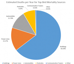 bird mortality