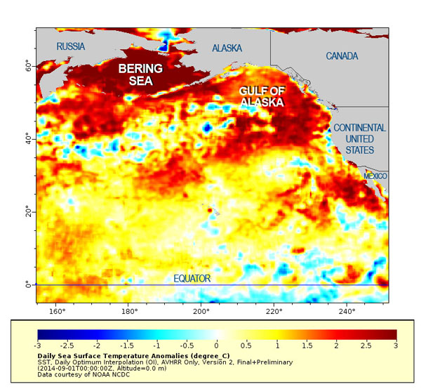 """Blob"" that warmed much of the Pacific Ocean, and caused distress on the corals."